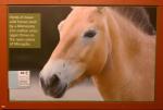 Asian Horses