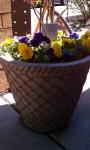TB flower Pot