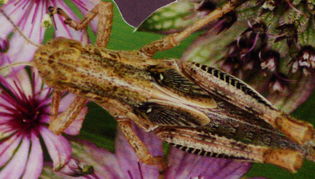 Close Up Detail of Grasshopper