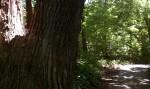 B05P16 - Minnehaha Creek Path