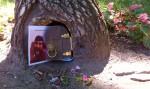 B05P19 - Gnome Home