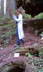 Redwoods 00